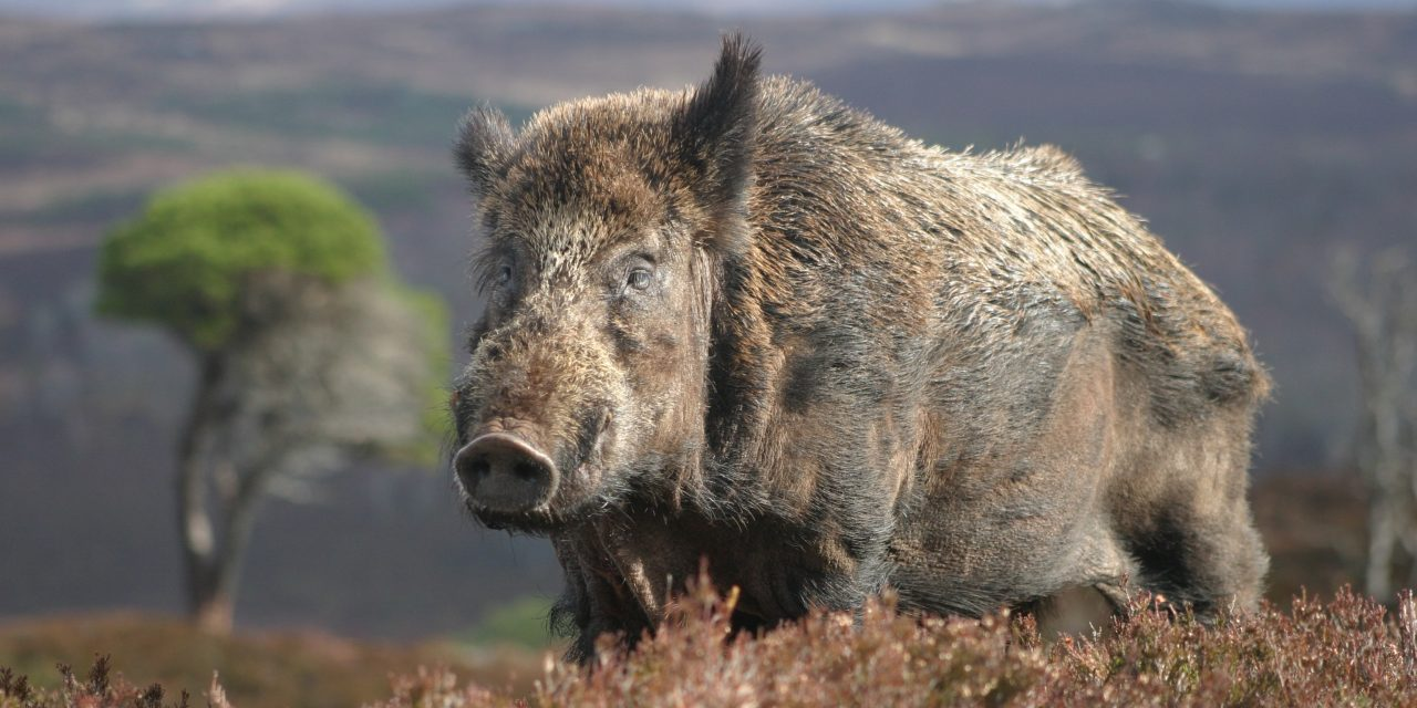 Avviso Danni Da Fauna Selvatica (Cinghiali) Annualità 2014, 2015 E 2016