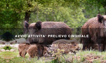 Avvio Attività Prelievo Controllato Cinghiale 2018