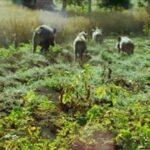 Danni da fauna selvatica